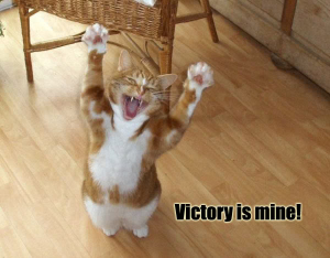 victory_cat