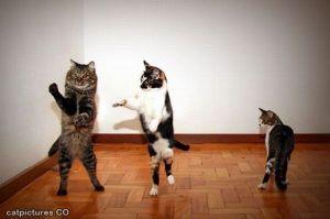 Dancing_Cats